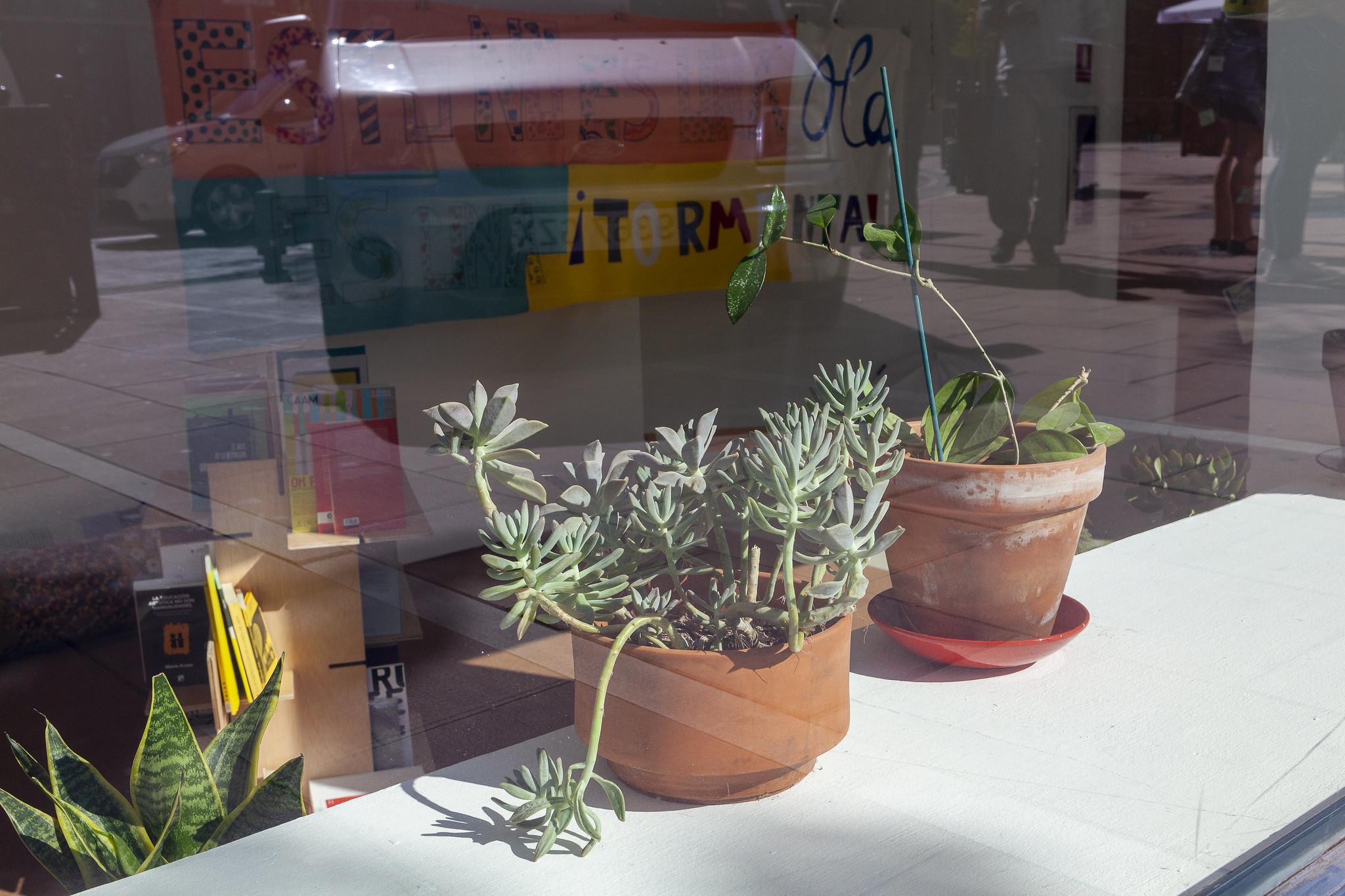 mediaTECA, 2020. Imagen plantas. Foto Ana Revuelta